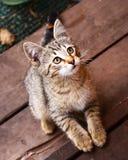 Petit porche gris rayé de chaton Photos libres de droits