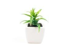 Petit pot de plante verte sur le fond blanc Photos libres de droits