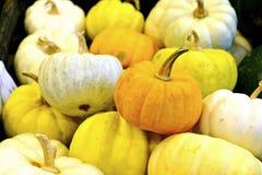 Petit potiron de potiron, blanc et jaune photo libre de droits