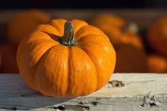 Petit potiron orange avec le foyer sélectif Image libre de droits