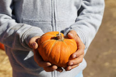 Petit potiron orange dans des mains Images stock