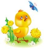 Petit poulet jaune illustration stock