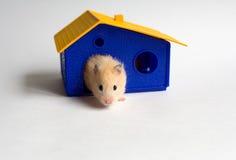 Petit propriétaire d'une maison Photo stock