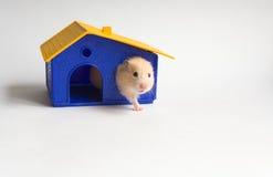 Petit propriétaire d'une maison Image stock