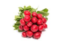Petit radis de jardin d'isolement sur le blanc Photo stock