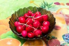 Petit radis organique cru de jardin dans une cuvette sur la table de cuisine Images libres de droits