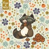 Petit raton laveur drôle mangeant des biscuits Image stock