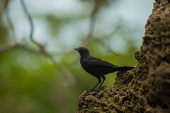 Petit regard d'oiseau photographie stock