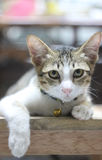 Petit regard de chat autour Photographie stock libre de droits