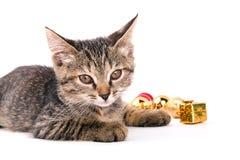 Petit regard gris de chaton à l'appareil-photo d'isolement sur le fond blanc Photographie stock libre de droits