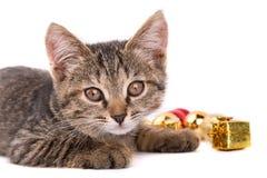 Petit regard gris de chaton à l'appareil-photo d'isolement sur le fond blanc Images libres de droits