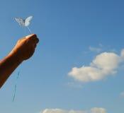 Petit ressembler de cerf-volant à un papillon Photos libres de droits