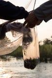 Petit sachet en plastique de poissons Image stock