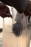 Petit sachet en plastique de poissons Photos libres de droits