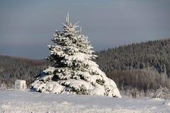 Petit sapin couvert de neige Photos stock