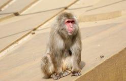 Petit singe pelucheux Photographie stock