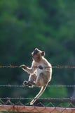Petit singe s'élevant sur la barrière en acier sur le fond trouble Photo libre de droits