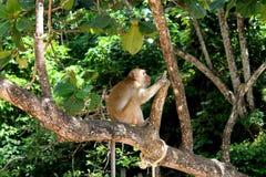 Petit singe sur l'arbre Photos stock
