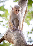 Petit singe sur l'arbre Photo stock
