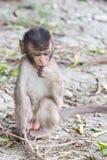 Petit singe timide Photographie stock libre de droits