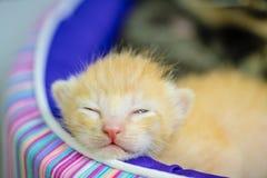 Petit sommeil mignon de chat Photo libre de droits