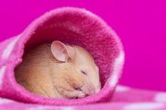 Petit sommeil mignon de souris Photo libre de droits