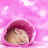 Petit sommeil mignon de souris Photo stock