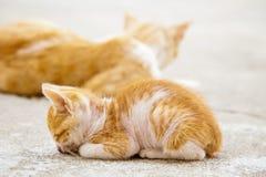 Petit sommeil rouge de chaton photos libres de droits