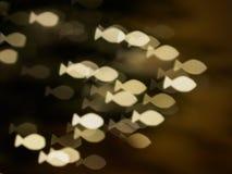 Petit thème brillant de carte postale de troupeau de poissons Photos libres de droits