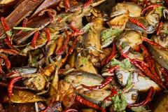 Petit thon mariné avec des piments et des herbes Photo stock
