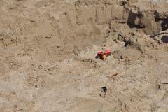 Petit tracteur rouge de jouet en métal sur la plage humide de sable Vacati d'été Images stock