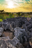 Petit Tsingy solnedgång Fotografering för Bildbyråer