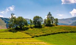 Petit verger sur un champ rural herbeux photos libres de droits