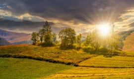 Petit verger sur un champ rural herbeux au coucher du soleil Image libre de droits
