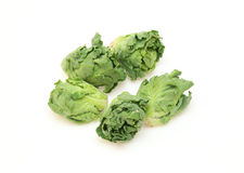 Petit Vert. The vegetables which crossbred of Brussels sprouts and kale royalty free stock image