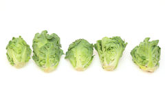Petit Vert. The vegetables which crossbred of Brussels sprouts and kale royalty free stock photo