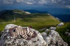 Petit zèbre mignon s'étendant sur la roche dans le pré idyllique, frais, vert, herbeux sur le plateau de rax photographie stock