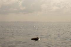 Petite émergence de récif Photo stock