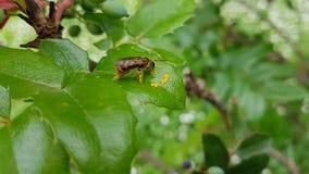 Petite abeille photographie stock libre de droits