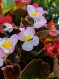 Petite abeille occupée images stock