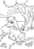 Petite allocation des places mignonne de poney sur le champ Photo libre de droits