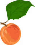 Petite apricot. Figure one Petite apricot with green leaf. , one apricot and one green leaf Stock Photography