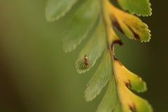 Petite araignée Image libre de droits