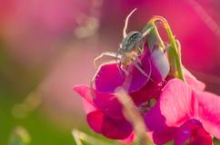 Petite araignée Photo libre de droits