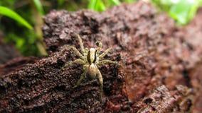 Petite araignée de beauté dans l'arbre photographie stock libre de droits