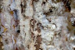 Petite araignée de forêt Photos stock