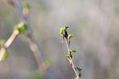 Petite araignée en Web sur une branche d'arbre Photographie stock