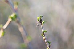 Petite araignée en Web sur une branche d'arbre Images stock