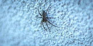 Petite araignée sur le mur blanc Image libre de droits