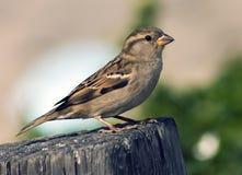 Petite a bird Royalty Free Stock Image